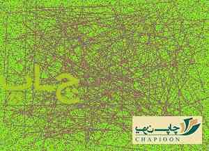 بسته بندی خرما در اروپا
