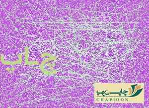 خرید سررسید فانتزی 1401
